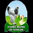 Brahma Süs Tavukları